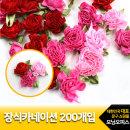 장식카네이션200개입/코모/브로치만들기