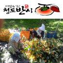홍시용/곶감용꼭지있는감/청도반시5kg/대과만판매