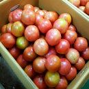 단단하고 맛있는 찰토마토 5kg 5번(소과)