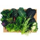 싱싱하고 건강한 모듬 쌈채소 1kg 당일수확 10-12종