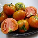 황금열매 맛있는 완숙 일반 찰 토마토 주스용10kg 중과