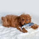 해밀펫 피쉬 자동 강아지 고양이 장난감 훈련용품