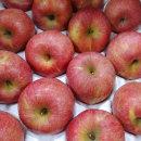 황금열매 국내산 맛있는 가정용 흠집 사과 5kg소과