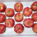 명절 설 추석선물세트 사과 5kg (대과) 보자기포함