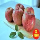 사과 아침사과 부사 홍로 장수 사과 사과 2.5KG